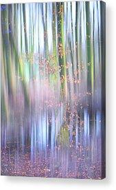 Vide Acrylic Prints