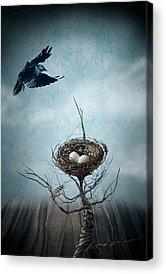 Crows Nest Acrylic Prints