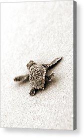 Seascape Photographs Acrylic Prints