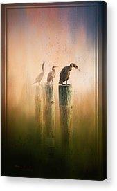 Cormorant Acrylic Prints