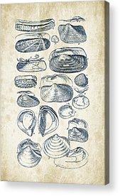 Mollusca Acrylic Prints