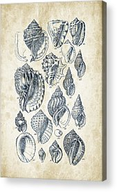 Freshwater Mussel Acrylic Prints