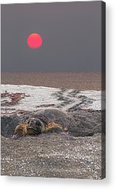 South Hutchinson Island Acrylic Prints