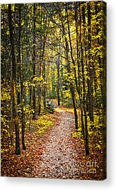 Wooded Path Acrylic Prints