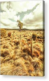 Moorland Acrylic Prints