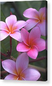 Hawaiian Flower Acrylic Prints