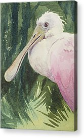 Rare Bird Acrylic Prints