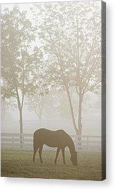 Kentucky Horse Park Acrylic Prints