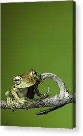 Rainforest Acrylic Prints