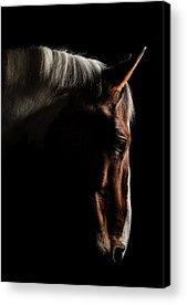 Racehorse Acrylic Prints