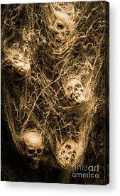 Spiderweb Acrylic Prints