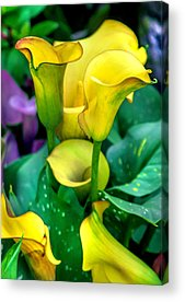 Spring Break Acrylic Prints