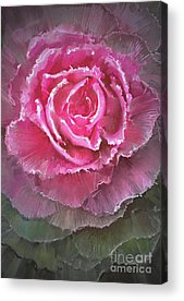 Ornamental Acrylic Prints