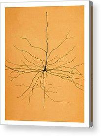Brain Cell Acrylic Prints
