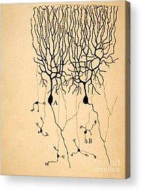 Biology Acrylic Prints
