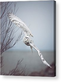 Flight Photographs Acrylic Prints