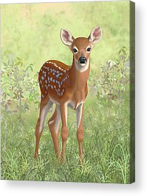 Cute Fawn Acrylic Prints