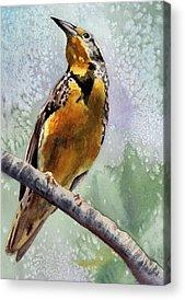 Meadowlark Paintings Acrylic Prints