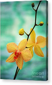 Orchid Acrylic Prints