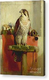 Birds Of Prey Acrylic Prints