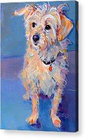 Cairn Terrier Acrylic Prints