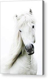 Horse Images Acrylic Prints