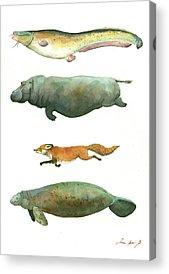 Catfish Acrylic Prints