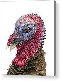 Turkey Feather Acrylic Prints
