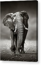 Front View Acrylic Prints