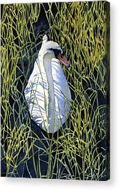 Swans. Paintings Acrylic Prints