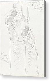 Tarpon Drawings Acrylic Prints