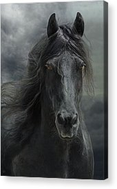 Friesian Acrylic Prints