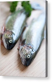 Rainbow Trout Acrylic Prints