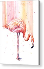 Flamingos Acrylic Prints