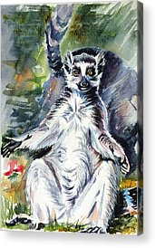 Ring Tailed Lemurs Acrylic Prints