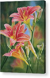 Day Lily Acrylic Prints