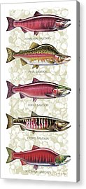 Coho Paintings Acrylic Prints