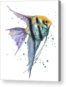 Angelfish Acrylic Prints