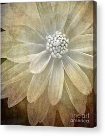 Textured Floral Acrylic Prints