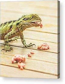 Australian Wildlife Acrylic Prints