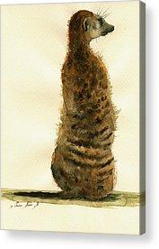 Meerkat Acrylic Prints