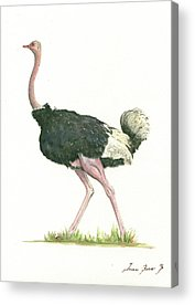 Ostrich Paintings Acrylic Prints