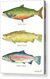 Trout Acrylic Prints