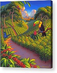 Toucan Acrylic Prints
