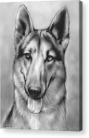 German Shepherd Acrylic Prints