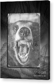 Hibernation Acrylic Prints
