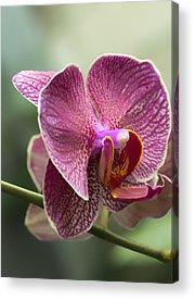 Orchid Cactus Acrylic Prints