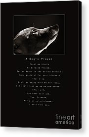 Rescued Greyhound Acrylic Prints