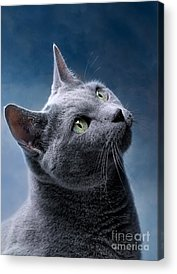 Cat Acrylic Prints