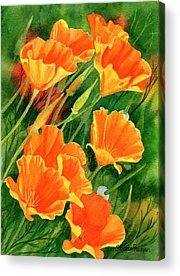 California Poppies Acrylic Prints